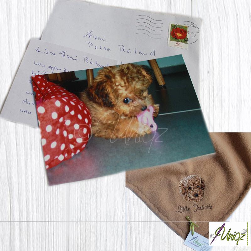 Toypudel mit Uniqz-Hundedecke, Rassehund-Stickerei